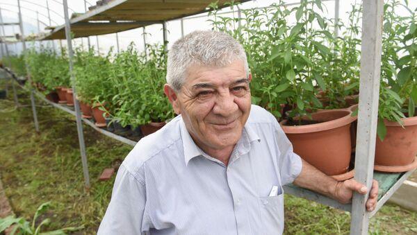 Автор проекта по выращиванию стевии в Армении Рафик Казинян - Sputnik Արմենիա