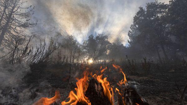Пламя огня в лесу в Калифорнии  - Sputnik Армения