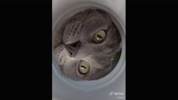 Не прячься, мы знаем, что ты здесь - Sputnik Армения