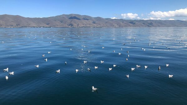 Чайки на озере Севан - Sputnik Արմենիա