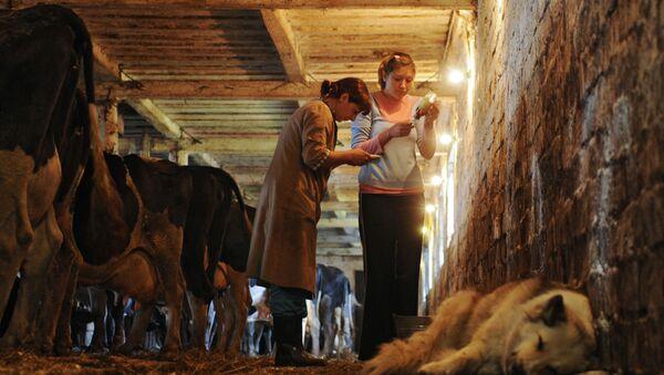 Работа врачей ветеринарной лечебницы  - Sputnik Армения