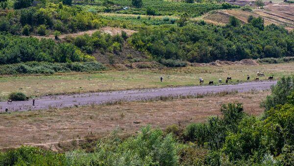 Пасущиеся коровы у взлетно-посадочной полосы недействующего аэропорта Берда, Айгепар, Тавушская область - Sputnik Армения