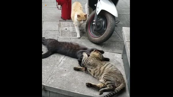 Кот застукал кошку с любовником – смешное видео животной драмы - Sputnik Армения