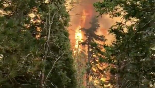 Огненное торнадо в Калифорнии (13 сентября 2020). - Sputnik Армения