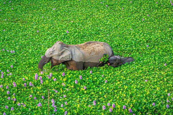 Снимок Wait up Mommy, look what I got for you! фотографа Kunal Gupta, ставший финалистом конкурса 2020 The Comedy Wildlife Photography Awards - Sputnik Армения