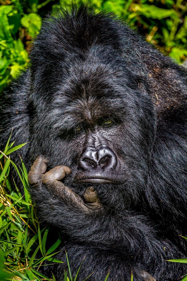 Снимок Boredom фотографа Marcus Westberg, ставший финалистом конкурса 2020 The Comedy Wildlife Photography Awards - Sputnik Армения