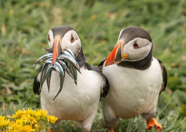 Снимок Seriously, would you share some фотографа Krisztina Scheeff, ставший финалистом конкурса 2020 The Comedy Wildlife Photography Awards - Sputnik Армения