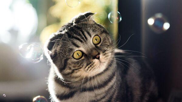 Котенок и пузыри - Sputnik Армения
