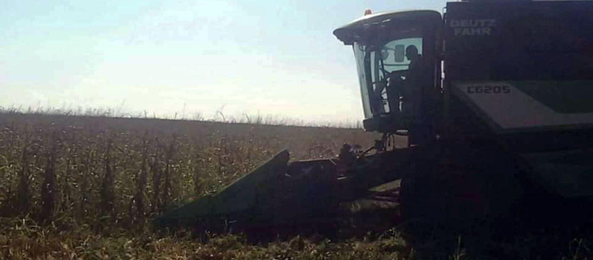 В Карабахе продолжаются работы по сбору урожая кукурузы и подсолнечника - Sputnik Արմենիա, 1920, 11.04.2021