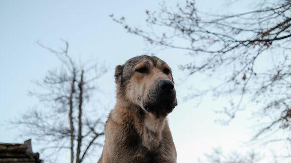 Собака на передовой - Sputnik Армения