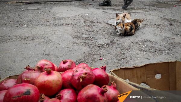 Жизнь в Степанакерте после окончания боевых действий (16 ноября 2020). Карабах - Sputnik Արմենիա