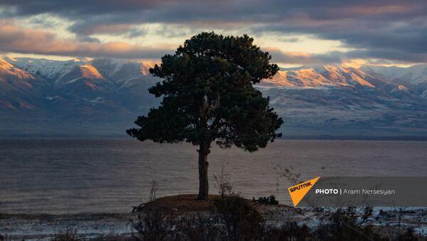 Одинокое дерево на берегу озера Севан, Гегаркуник - Sputnik Армения