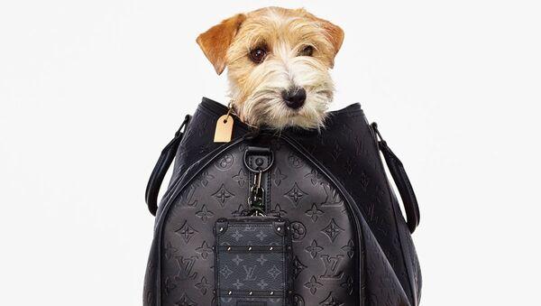 Почему бренды постят собак? 6 пород, которые милее, чем сумки Louis Vuitton - Sputnik Армения