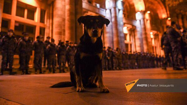 Щенок перед Домом правительства во время акции протеста против премьер-министра и правительства (1 декабря 2020). Еревaн - Sputnik Армения