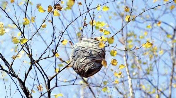 Թռչունի բույն - Sputnik Արմենիա