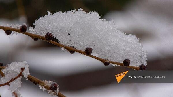 Ветка под снегом - Sputnik Армения