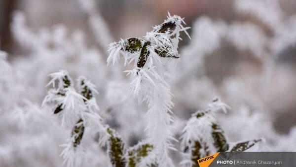 Покрытые инеем деревья - Sputnik Армения