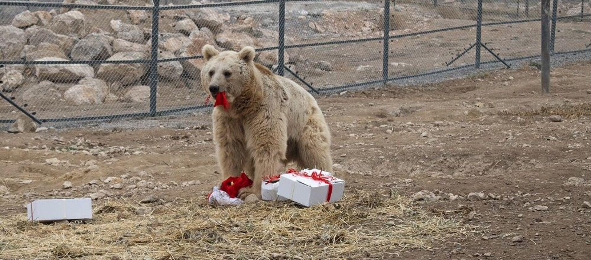 В Центре спасения диких животных (WRC) устроили новогодние подарки для медведей - Sputnik Армения, 1920, 15.02.2021