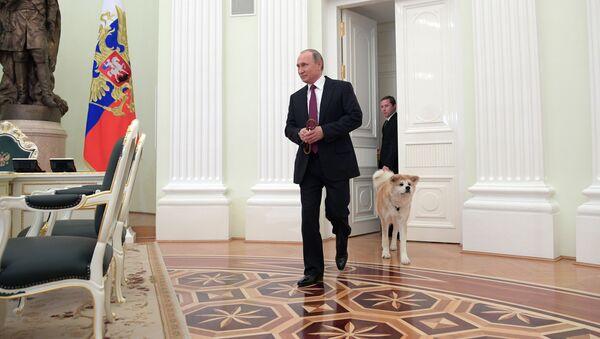 Президент РФ Владимир Путин с собакой Юмэ породы акита-ину перед началом интервью в Кремле  - Sputnik Արմենիա