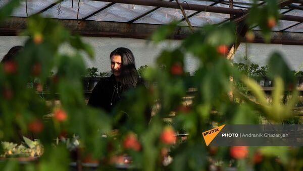 Цветочница Карине Товмасян во время беседы с корреспондентом Sputnik Армения в теплице - Sputnik Армения