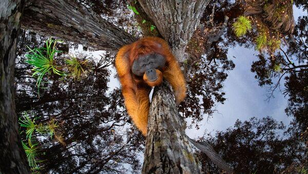 Снимок The World Is Going Upside Down канадского фотографа Thomas Vijayan, занявший первое место в категории Animals in their habitat и ставший победителем конкурса World Nature Photography Awards 2020 - Sputnik Армения