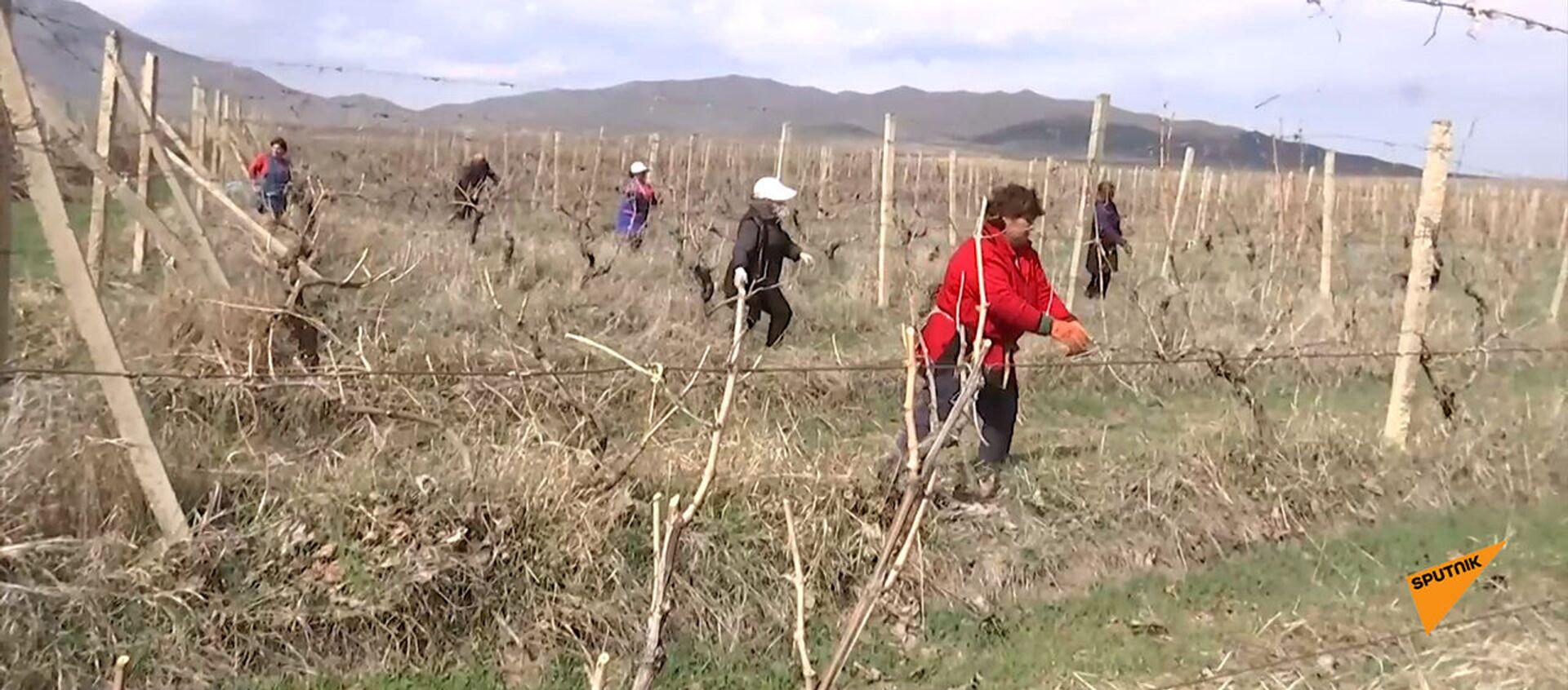 Российские миротворцы обеспечивают безопасность проведения сельхоз работ при подготовке к новому аграрному сезону в Карабахе - Sputnik Արմենիա, 1920, 20.03.2021