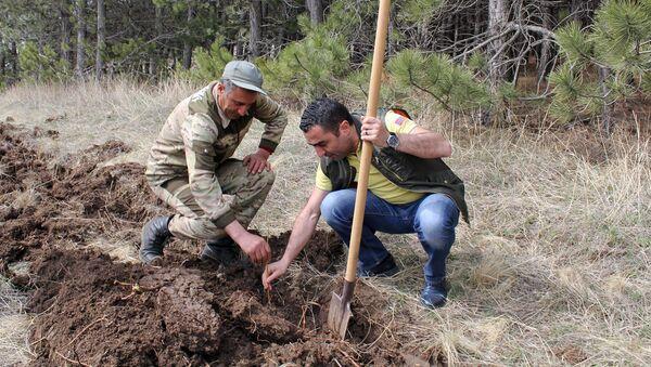 Министр окружающей среды Романос Петросян стартовал инициативу 10 миллионов деревьев (10 апреля 2021). Арагацотн - Sputnik Արմենիա