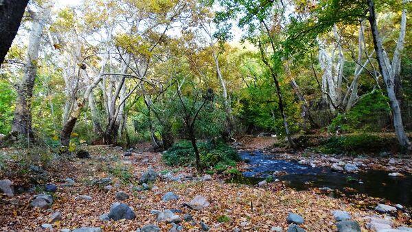 Платановый парк в долине реки Цав - Sputnik Армения