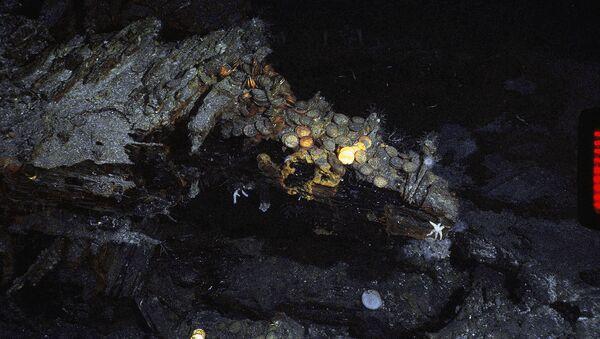 Клад с золотыми монетами - Sputnik Армения