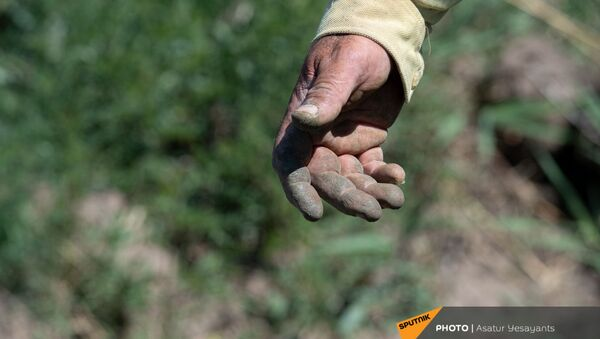 Рука жителя села Маргара Вардана - Sputnik Армения