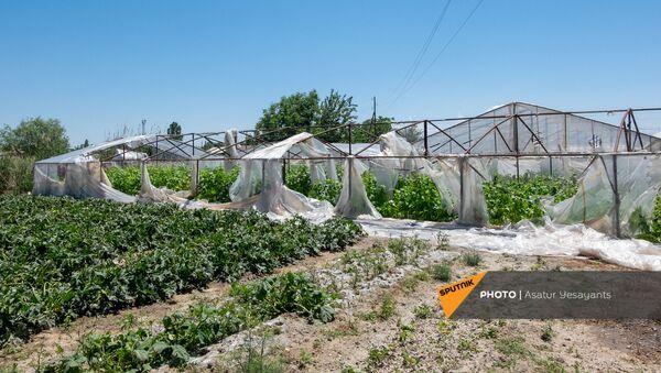 Поврежденная от ветра теплица в селе Джрарби Армавирской области - Sputnik Армения