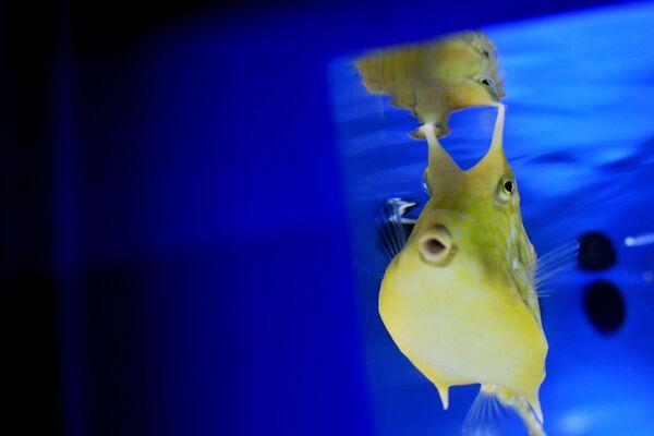 Էկզոտիկ ձուկը ակվարիումում, Միջերկրական ծովում և Իտալիայի գետերում ապրող էկզոտիկ ձկների և բույսերի ցուցահանդեսին - Sputnik Արմենիա