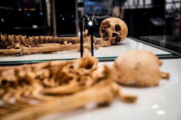 Հարազատների կմախքները Դանիայի ազգային թանգարանում - Sputnik Արմենիա