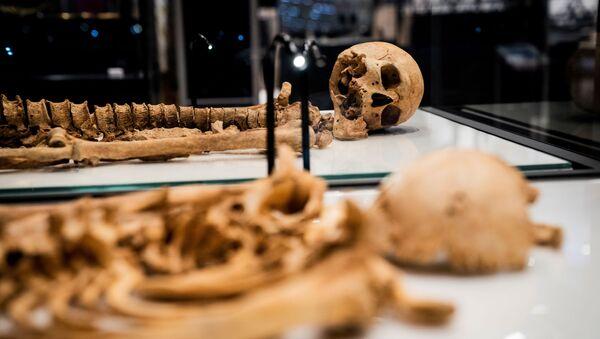 Два скелета, найденные в братской могиле в Оксфорде, Великобритания лежат в витрине Национального музея Дании - Sputnik Армения