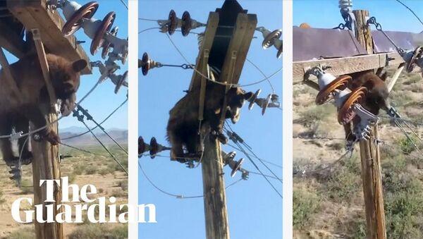 Медведь застрял на опорном столбе в Аризоне - Sputnik Армения