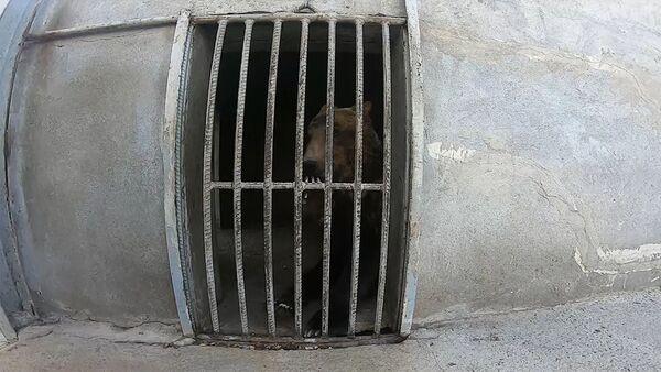 Հայաստանում արջեր են փրկել - Sputnik Արմենիա