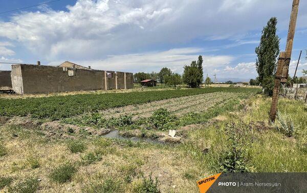 Поля с засохши урожаем в селе Бениамин Ширакской области - Sputnik Армения