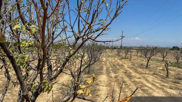 Засохший урожай села Егегнут Армавирской области - Sputnik Армения