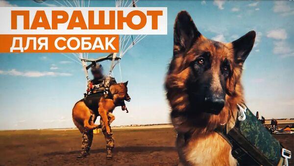 В России разработали систему десантирования для служебных собак - Sputnik Армения