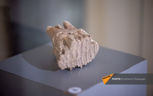 Երևանյան քարայրում հայտնաբերված գտածոներից - Sputnik Արմենիա