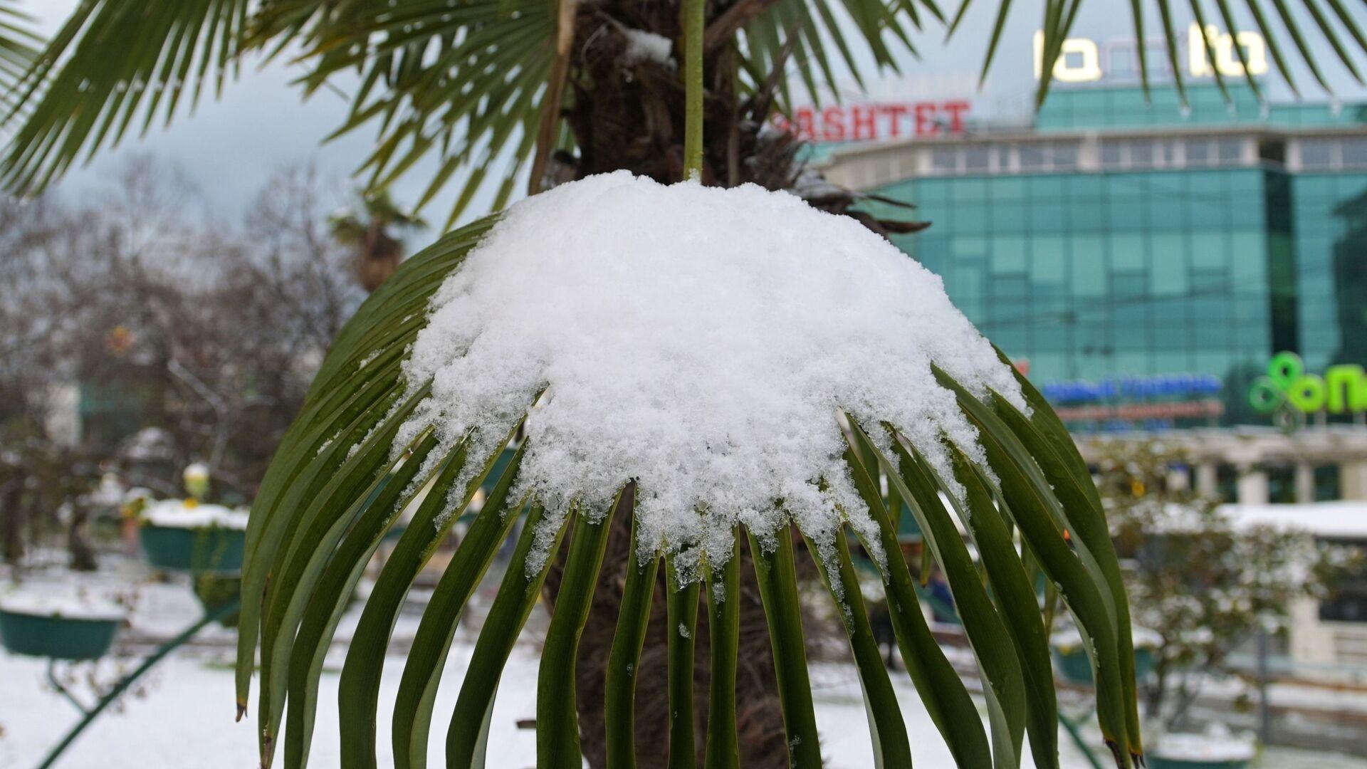 снег на пальме - Sputnik Արմենիա, 1920, 30.07.2021
