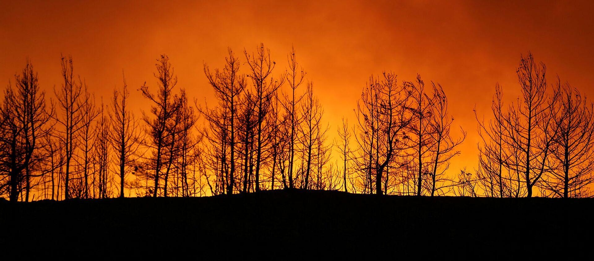 Лесной пожар близ города Манавгат, к востоку от курортного города Анталья (29 июля 2021). Турция - Sputnik Արմենիա, 1920, 30.07.2021