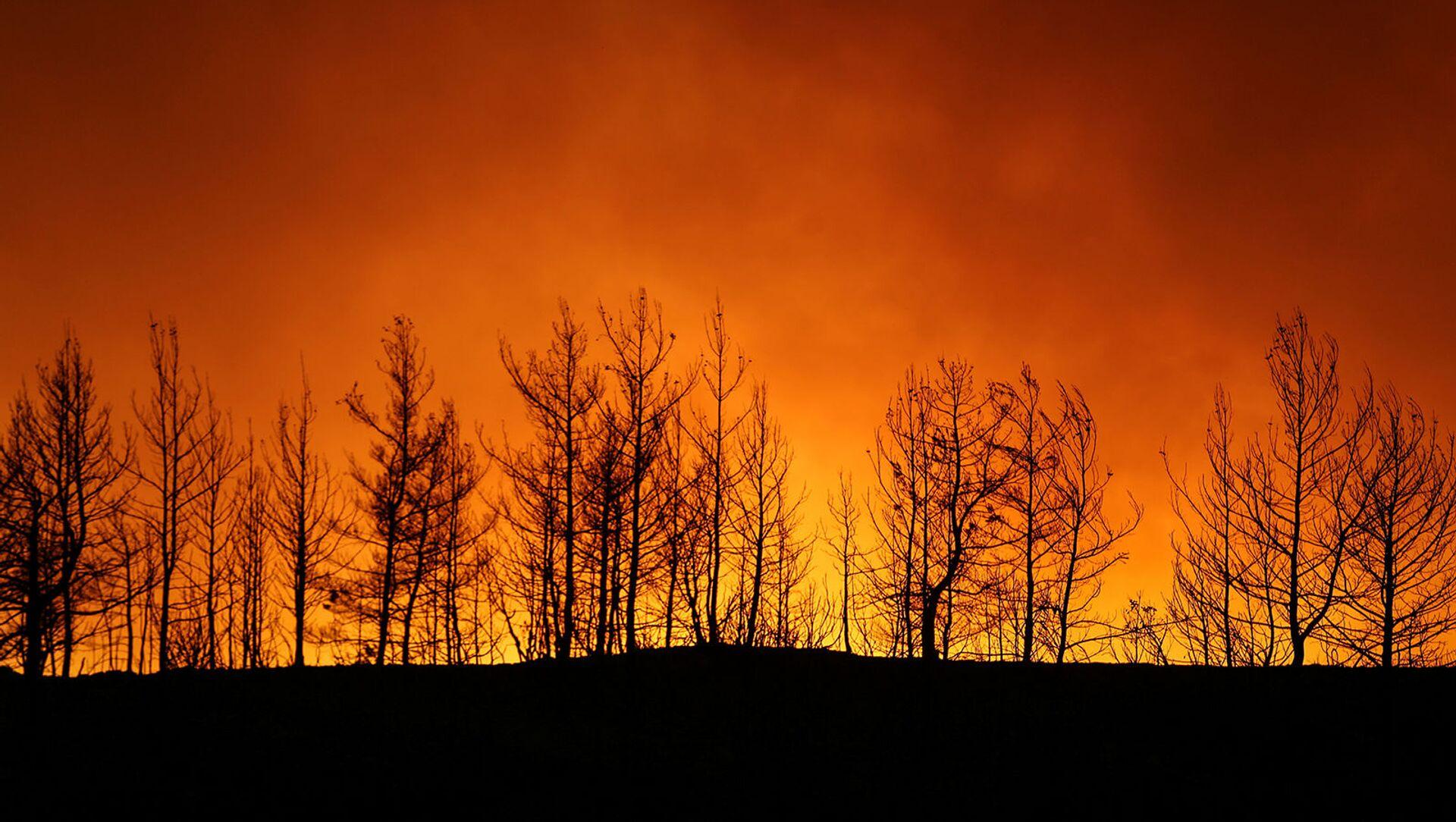 Лесной пожар близ города Манавгат, к востоку от курортного города Анталья (29 июля 2021). Турция - Sputnik Армения, 1920, 29.07.2021