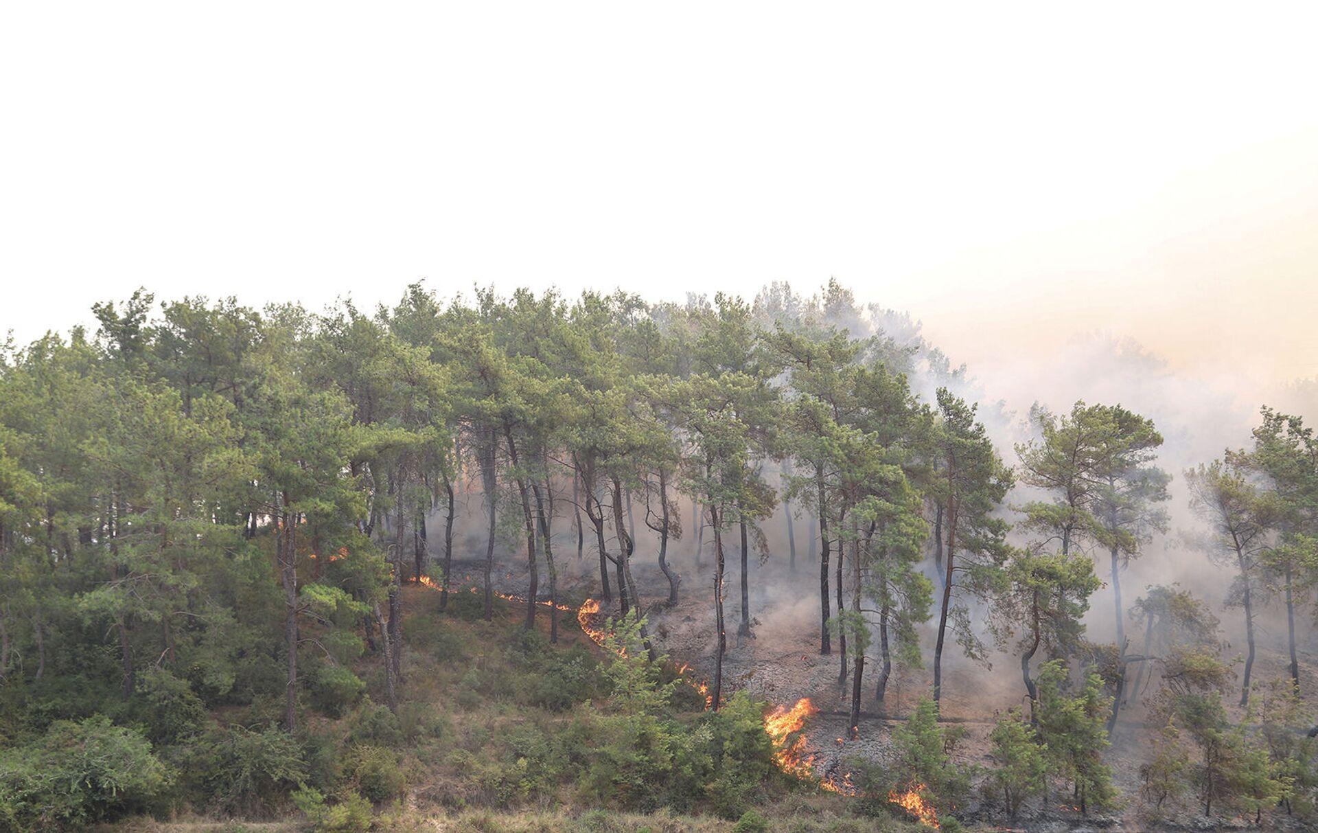 В Турции полыхают лесные пожары, есть погибшие - Sputnik Армения, 1920, 29.07.2021