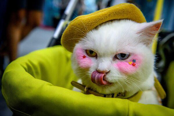 Տարբեր գույնի աչքերով կատուն Բանգկոկում - Sputnik Արմենիա