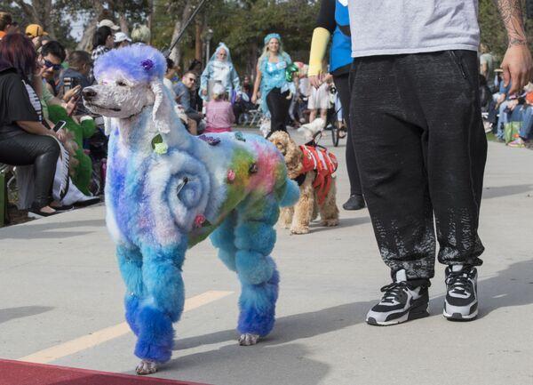 Շներն ու նրանց տերերը «Haute Dog Howl' oween» ամենամյա շքերթի ժամանակ, Լոնգ Բիչ, Կալիֆոռնիա - Sputnik Արմենիա