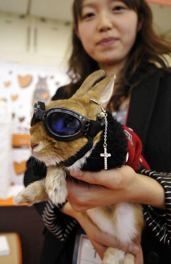 Ճագարների նորաձևության մրցույթ Յոկահոմայում, Ճապոնիա - Sputnik Արմենիա