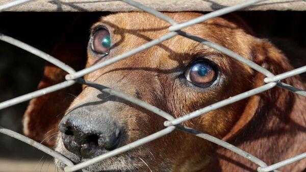 Собака в клетке - Sputnik Армения