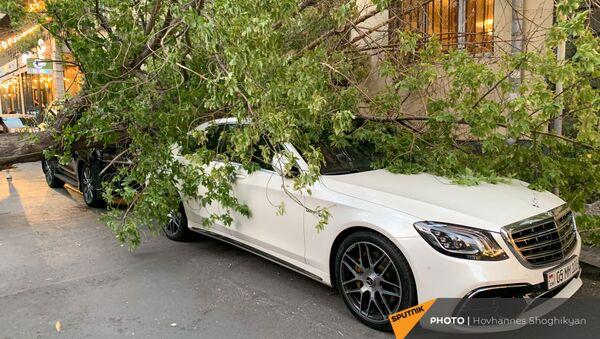 Перевернутое из-за ветра дерево на улице Парпеци (7 сентября 2021). Еревaн - Sputnik Արմենիա