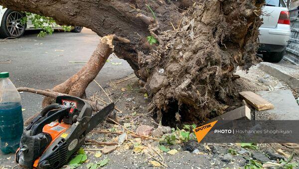 Перевернутое из-за ветра дерево на улице Парпеци (7 сентября 2021). Еревaн - Sputnik Армения